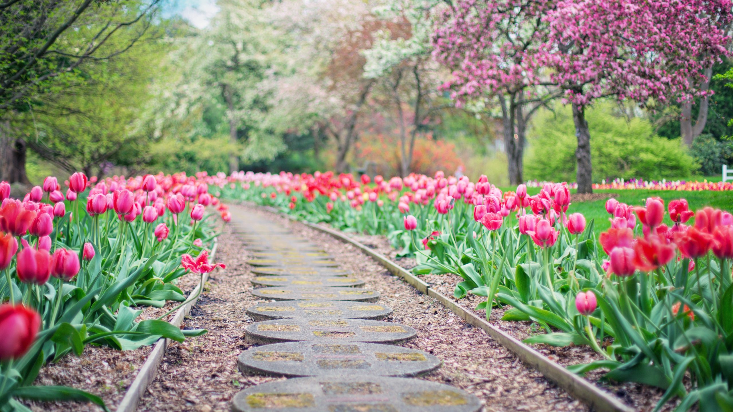 Joseph N'dour - Clarity Landscape & Gardens LLC
